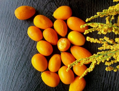 Example of kumquats, or Citrus Japonica.